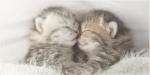 猫の育て方資格取得講座
