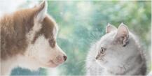 犬猫ストレスケア資格取得講座