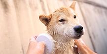 犬猫介護資格取得講座