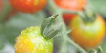 ベランダ菜園資格取得講座