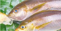 魚資格取得講座