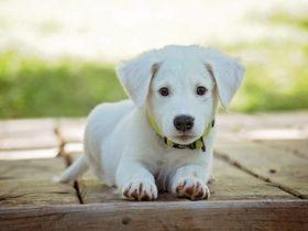 ワガママで言うことをきかない愛犬をお利口にする方法