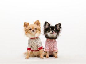 愛犬の魅力をさらに際立たせる!可愛い犬用ファッション小物の紹介