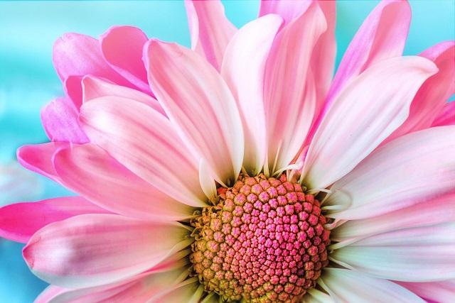 自分の誕生花って知ってる?誕生花や花言葉を知ってると得する8つのこと