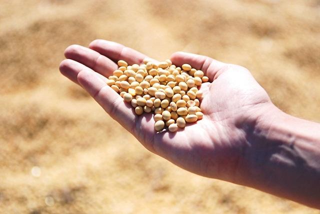 手の平の上に大豆を乗せている