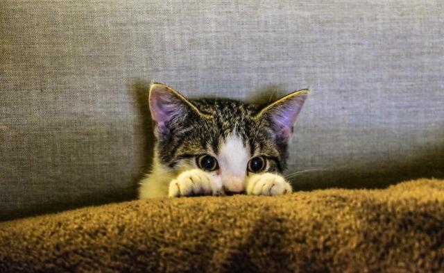 ソファの隙間からどこかをのぞいている子猫