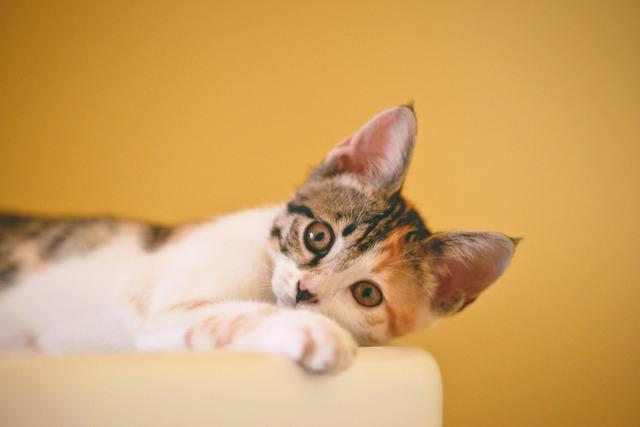 横になっている子猫