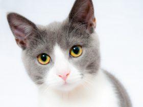 愛猫は何て言っているの?猫の仕草でわかる飼い主へのメッセージ!