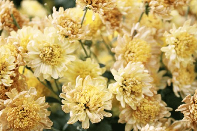 ボタニカルキャンドルで香りと花を楽しもう