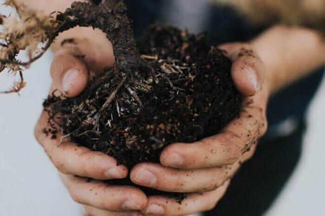 ガーデニングは土が重要!植物を支えられる土を選んで