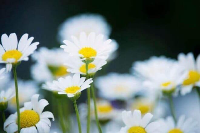ガーデニング初心者でも育てやすい植物とは?