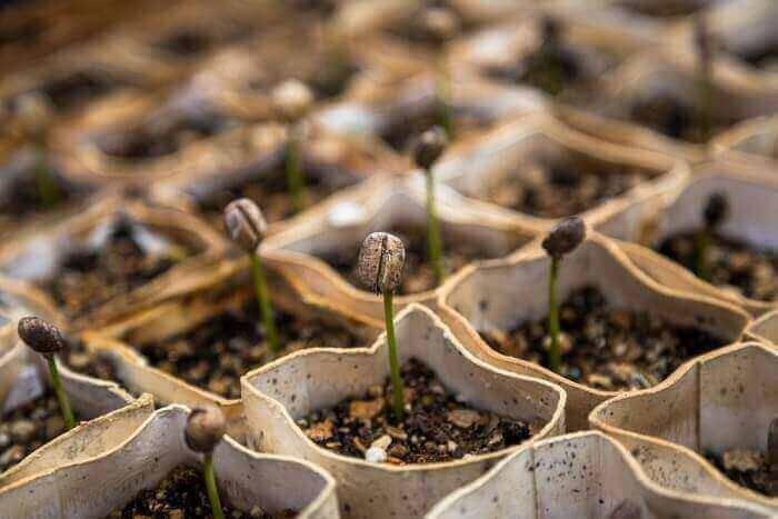 ガーデニングの土選びと土のつくり方