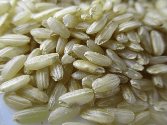 マクロビオティックの基本食玄米の健康増進効果