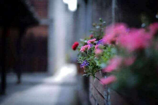 花壇レイアウトのコツをおさえて美しい花たちを楽しもう!