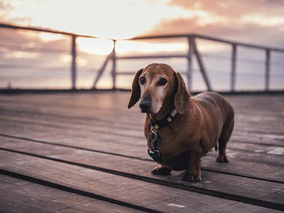 犬の繁殖はきちんと知識を身に付けたうえで行うこと