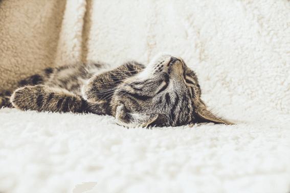 猫の交配と繁殖を進めるなら計画的に!