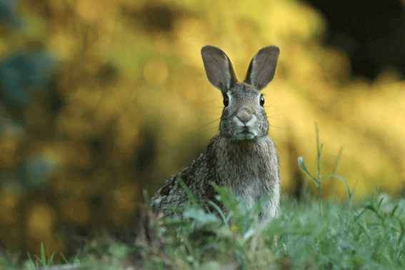 動物に関わる仕事がしたい!種類や資格にはどんなものがある?