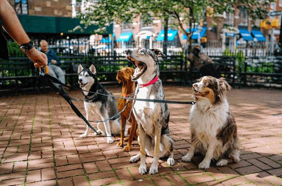 犬種標準やスタンダードとは?基本を徹底解説