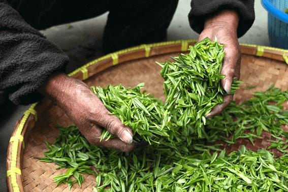 家庭でできる紅茶の作り方