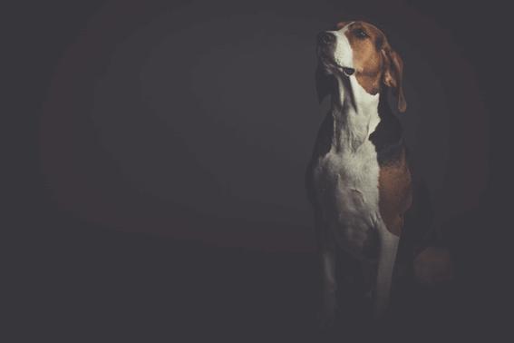 犬の血統書とはさまざまな情報を記載する書類のこと