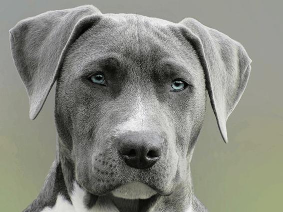 犬の血統書とは?内容や登録方法を解説