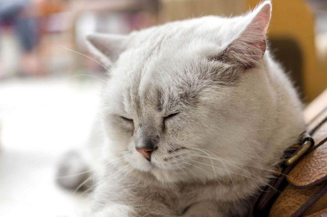 ペットとの暮らしに役立つペットトリミングの資格