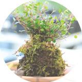 盆栽資格講座