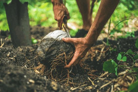 ココナッツオイルの賞味期限は?保存方法と使い切るアイデア