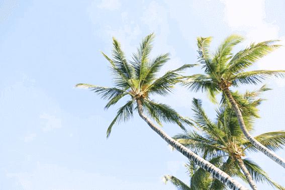 ココナッツオイルの種類や用途による選び方