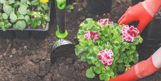 有機栽培について