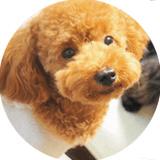 犬猫ストレスケア資格講座