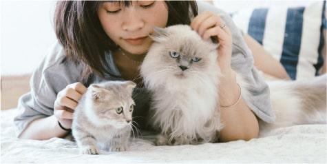 動物に対する愛情