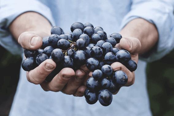 ワインに使われるぶどうの品種とは?