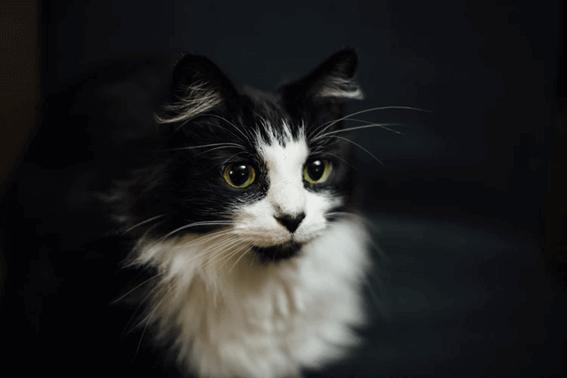 猫が茶色いものを吐いたら冷静に対処しよう