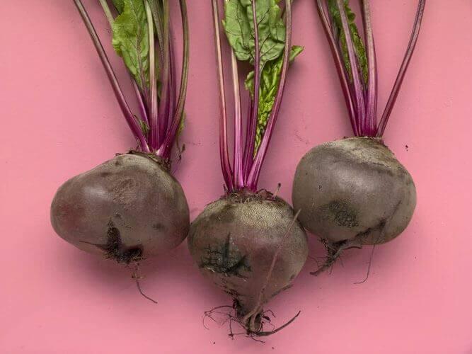 春からプランターで野菜を育てて夏においしく食べよう