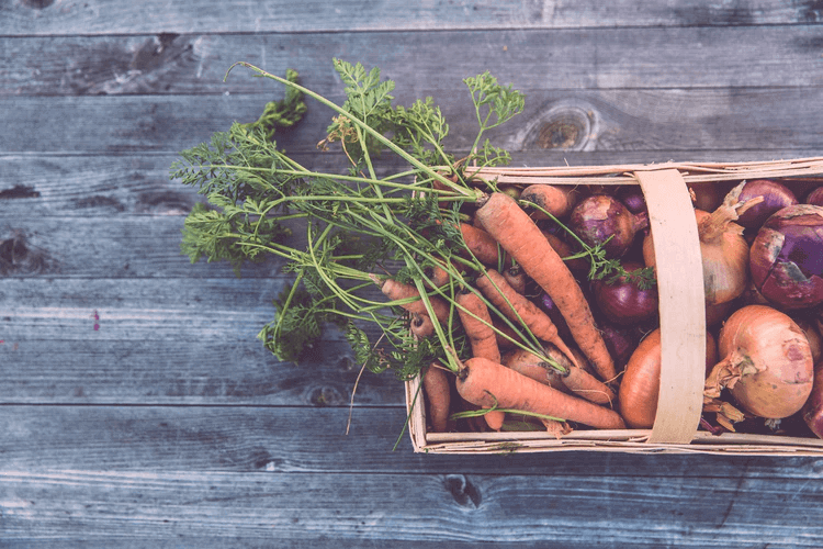 プランターで秋冬の野菜を育てよう