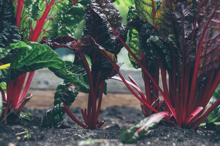家庭菜園やベランダ菜園に関する資格を取得しよう
