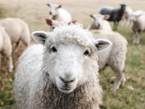羊毛フェルトは種類がたくさんある!