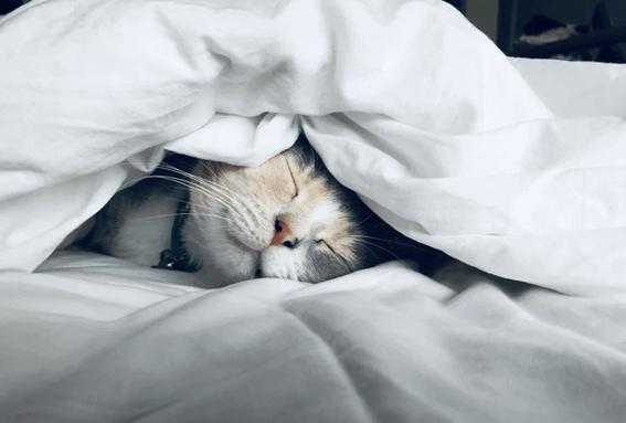 猫の育て方は?最初に考えておきたいことやポイントを紹介!