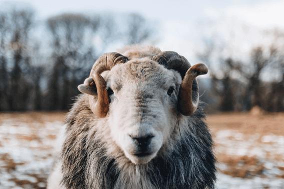 羊毛フェルトの講師を目指してみては?