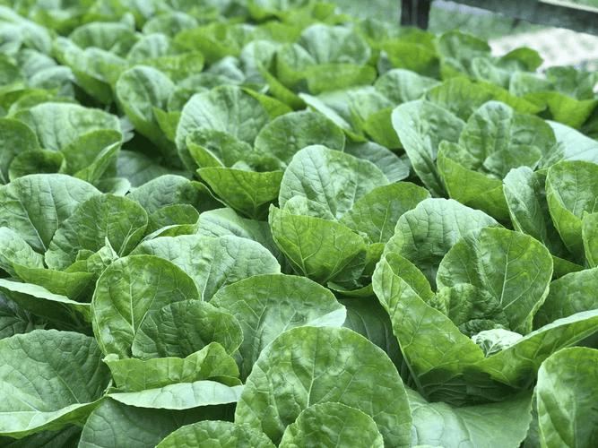 プランターで出来る野菜を育ててみよう