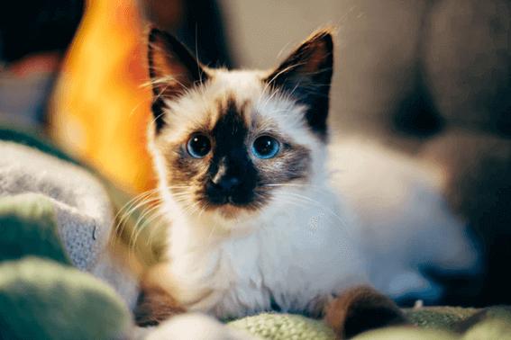 猫の避妊手術は必要?まずはタイミングや注意点を理解して!