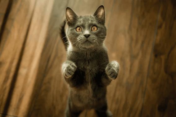 猫のトイレの場所をきちんと決めよう