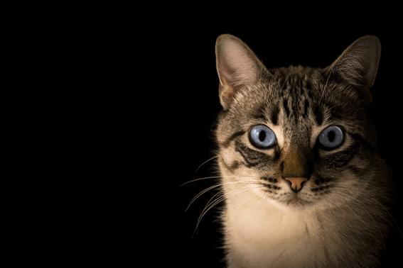 猫の餌入れや餌台は高さに注意して選ぼう