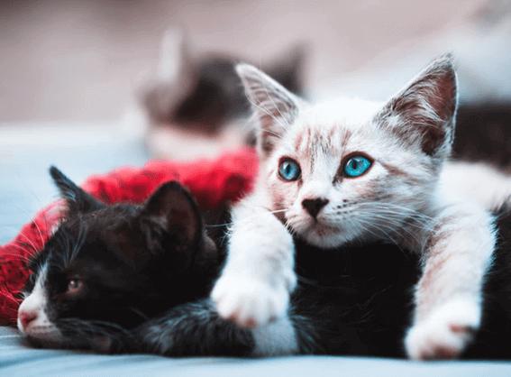 猫のトイレの置き場所はどこがいい?適した場所と適さない場所をそれぞれ紹介