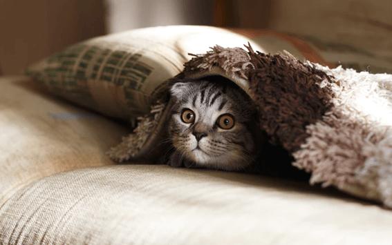 猫のトリミングとは?必要性やトリミング方法を解説!