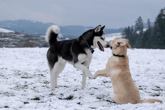 犬をしっかりしつけして甘噛みをやめさせよう