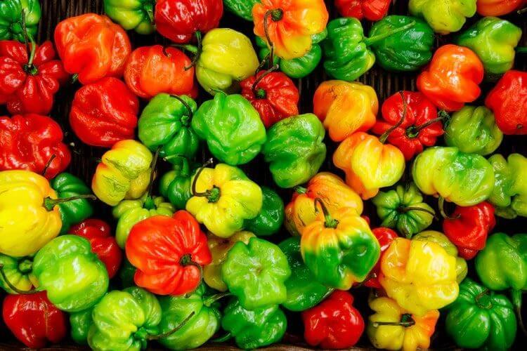 プランターで手軽に作りたい︕おすすめの夏野菜や香味野菜をピックアップ