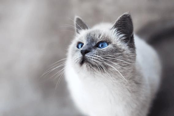 猫には適量のご飯を与えるようにしよう
