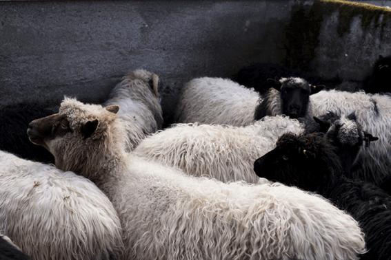 羊毛フェルトで失敗したとしても冷静に対処しよう